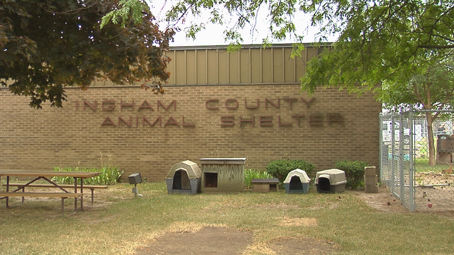 REPORT: Failures contributed to suffering and neglect of dogs seized in dogfighting ring