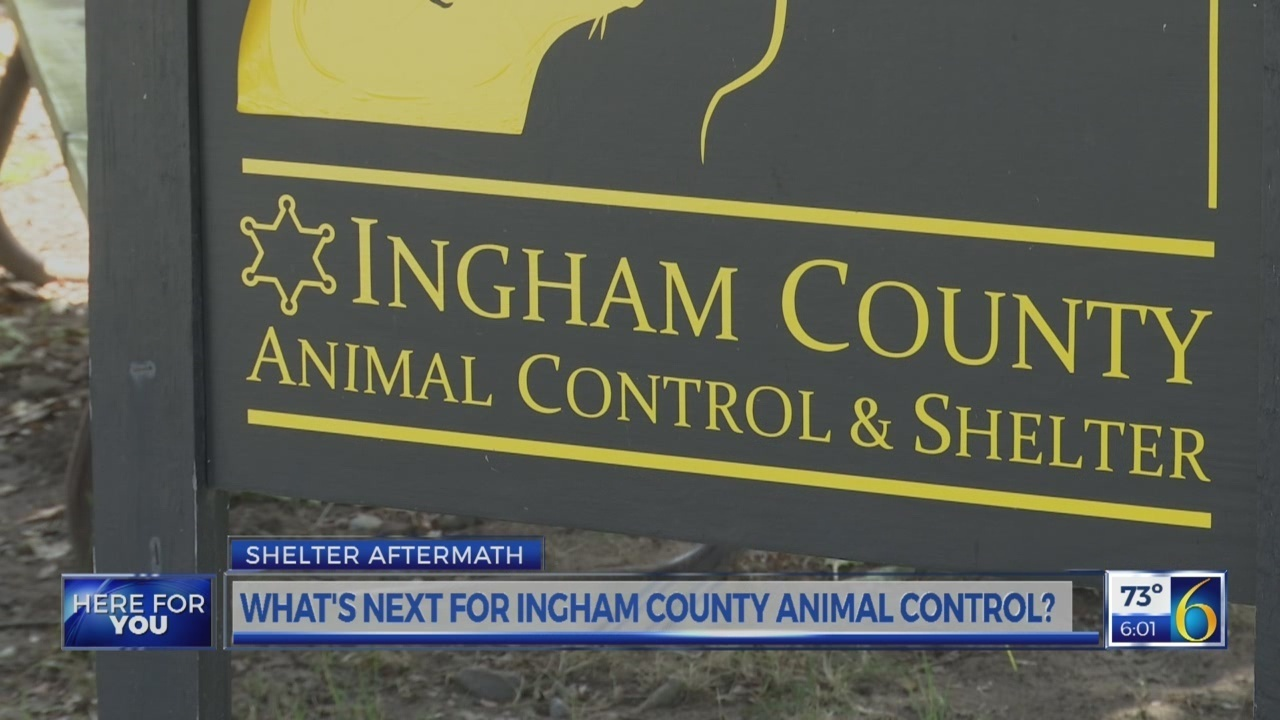 Cats I929 Fm Shelter Aftermath Whats Next For Ingham County Animal Control