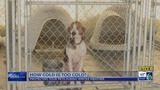 This Morning: Protecting your pets during winter weather