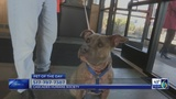 """Luna"" Pet Of The Day March 19"